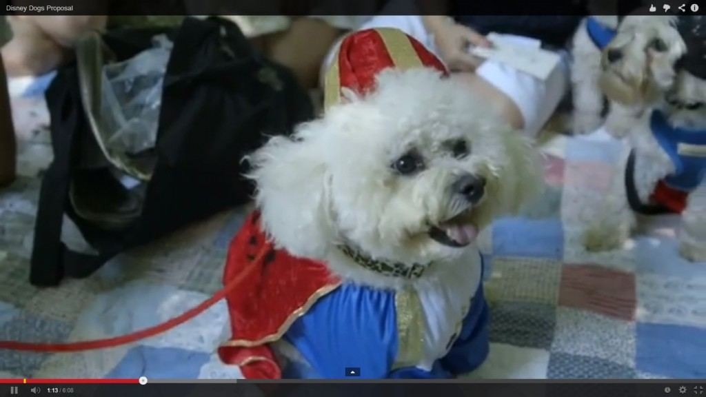 How cute is Monty dressed up as Prince Charming!!